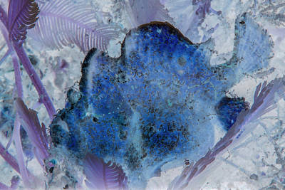 Photograph - Under The Sea Colorful Watercolor Art #22 by Debra and Dave Vanderlaan