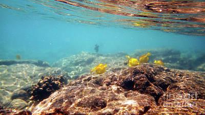 Photograph - Under The Sea by Karen Nicholson