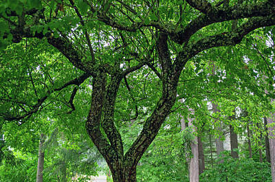 Photograph - Under The Shade Tree by Tikvah's Hope