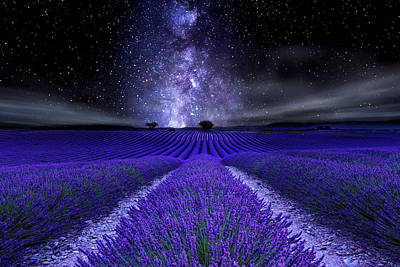 Photograph - Under The Stars by Jorge Maia