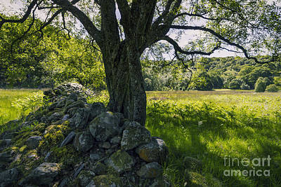 Photograph - Under The Summer Tree by Ian Mitchell