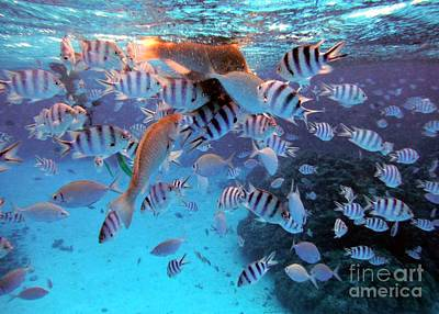Photograph - Under The Surface by Barbie Corbett-Newmin