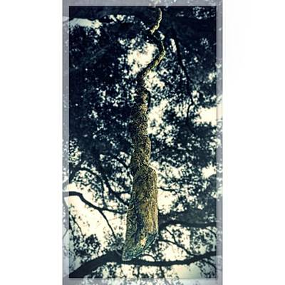 Background Photograph - #under #the #tree #hanging #limb #vine by Peggy Hoefner