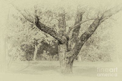 Photograph - Under The Tree by William Norton
