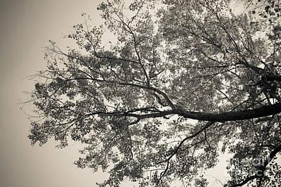 Photograph - Under The Trees by Ana V Ramirez