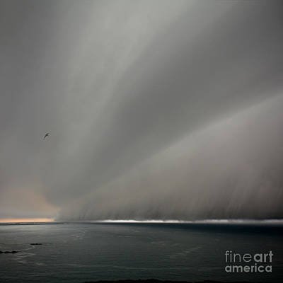 Photograph - Under The Weather With Fleeing Gull by Paul Davenport
