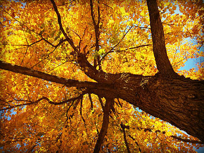 Elm Digital Art - Under The Yellow Fall Leaves by Kathy M Krause