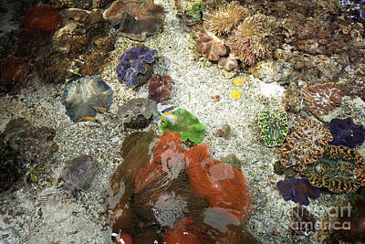Photograph - Under Water Life by Carol Lynn Coronios