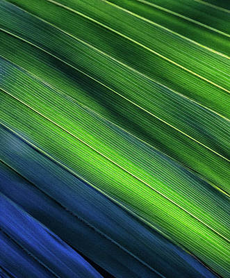 Photograph - Underside Hues by Art Cole