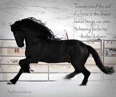 Understand The Soul Of A Horse Art Print