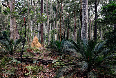 Photograph - Understorey by Nicholas Blackwell