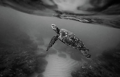 Photograph - Underwater Beauty by Unsplash