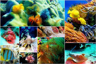 Fish Underwater Painting - Underwater Caribbean Sea Collage by Elaine Plesser