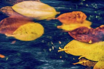 Photograph - Underwater Colors by Gene Garnace