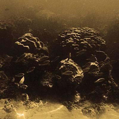 Underwater Evening Landscape Original by LeoLeo Khm