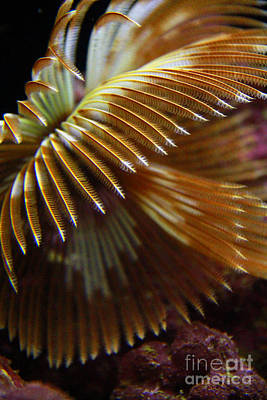 Photograph - Underwater Feathers by Jennifer Bright