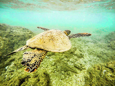 Hawaii Sea Turtle Photograph - Underwater Flight by Peter Irwindale