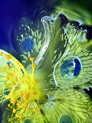 Photograph - Underwater Flower Abstraction 1 by Lorella Schoales
