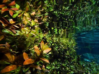 Photograph - Underwater Garden by Sheri McLeroy