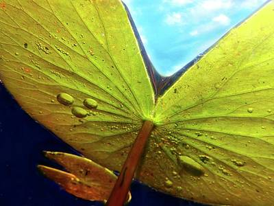 Photograph - Underwater Lily 7 by Lorella Schoales