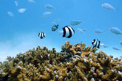 Of Sea Life Photograph - Underwater Okinawa by Takau99