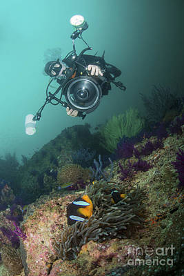 Underwater Photographer Capturing Art Print