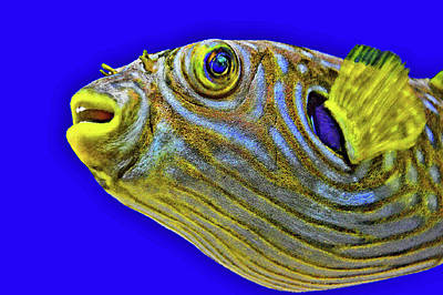 Underwater Portrait. Original
