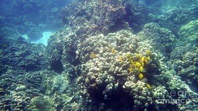 Photograph - Underwater World 2 by Karen Nicholson