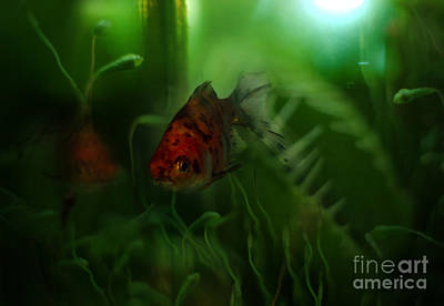 Underwater World Art Print by Angel  Tarantella