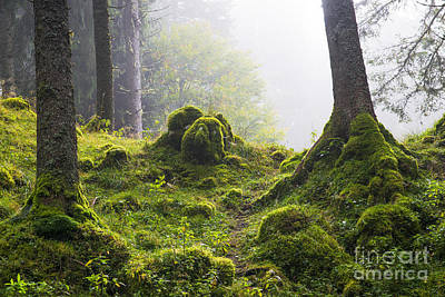 Forest Photograph - Underwood by Yuri Santin