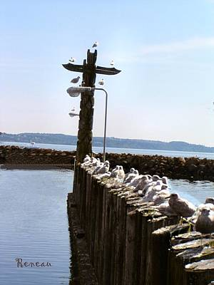 Photograph - Unemployment Line For Gulls by Sadie Reneau