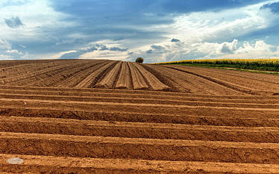 Photograph - Uneven Lines In A Field by Elenarts - Elena Duvernay photo