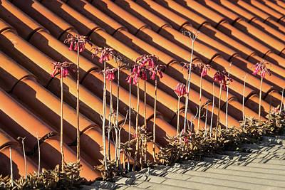 Photograph - Unexpected Garden - The Incredible Adaptive Powers Of Aloe Maculata by Georgia Mizuleva