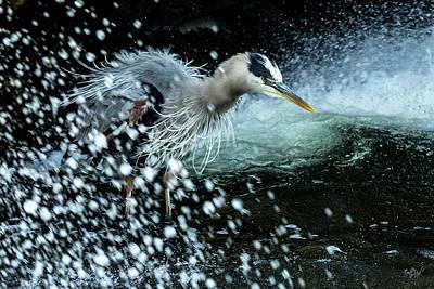 Turbulence Photograph - Unfazed Focus by Everet Regal