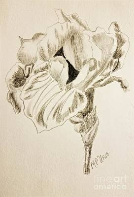 Drawing - Unfolding Iris by Maria Urso