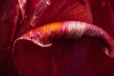 Photograph - Unfolding by Karol Livote