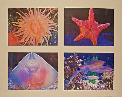 Hager Wall Art - Photograph - Unframed Sea Life Photo Assemblage, by Ruth Hager