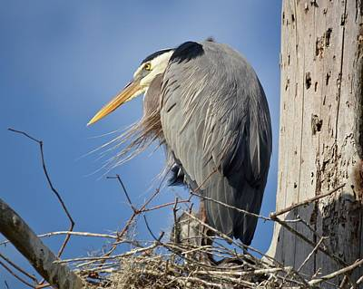 Photograph - Unhappy Heron by Carol Bradley