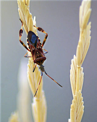 Photograph - Unidentified Insect by Ben Upham III