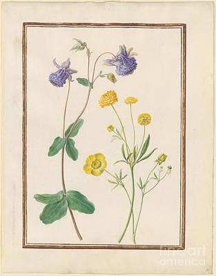 Ranunculus Painting - Unidentified Purple Flower  by MotionAge Designs
