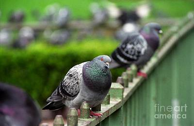 Photograph - Union Square Pigeons by James B Toy