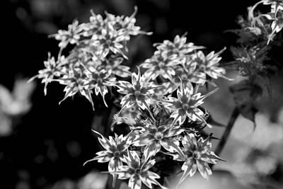Photograph - Unique Flower by Sumit Mehndiratta