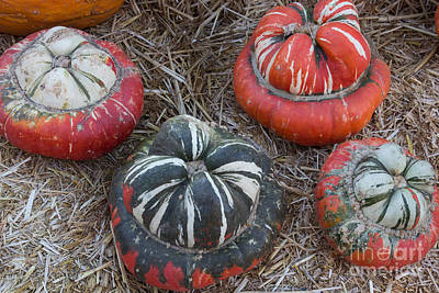 Photograph - Unique Pumpkins by Suzanne Luft