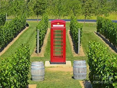 Unique Vineyard Original by John Malone