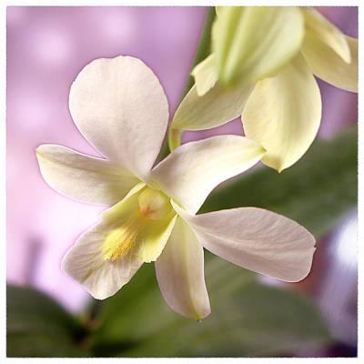 White Orchids Photograph - Unique White Orchid by Mike McGlothlen
