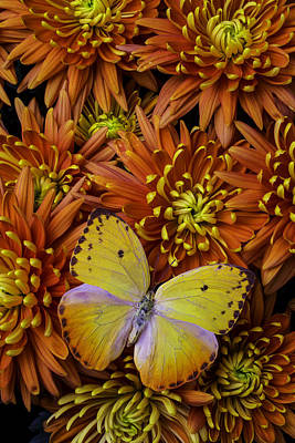 Unique Yellow Butterfly Art Print