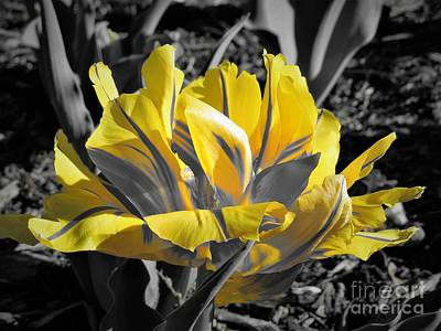 Photograph - Unique Yellow Flower by Chad and Stacey Hall