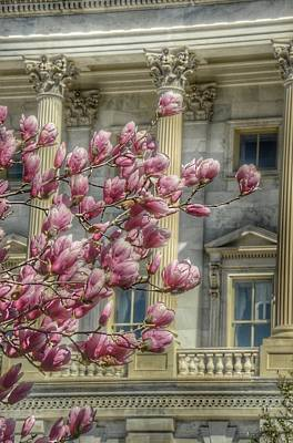 Photograph - United States Capitol - Magnolia Tree by Marianna Mills