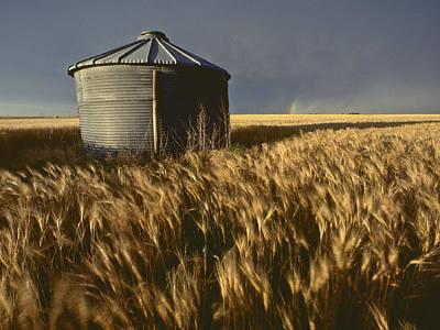 United States, Kansas Wheat Field Art Print by Keenpress