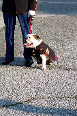 United States Marine Corp. Bulldog Art Print by Kenneth Summers